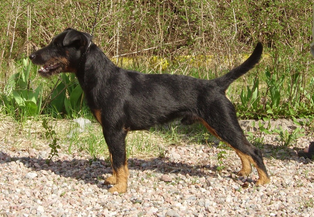 Very Rare Dog Breeds Rare Dog Breeds List